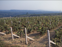 Foto: Grace Vineyards in der Provinz Shanxi