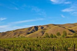 Mountains near Wente Vineyards. Source: Matthias Stelzig