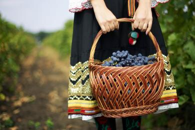 Moldova Grapes