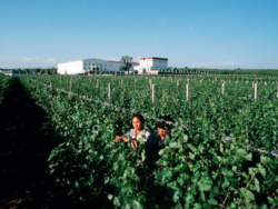 Foto: Grace Vineyards in der Provinz Shanxi.