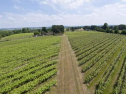 Foto: Panorama Brightwell Winery