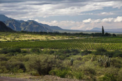 Landschaft in Cafayate © Wines of Argentina